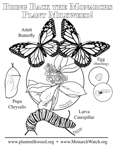 life cycle of a butterfly coloring page - parent and teacher notes on bas relief products